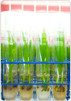 Tissue Culture Technology