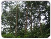 img_plantation4